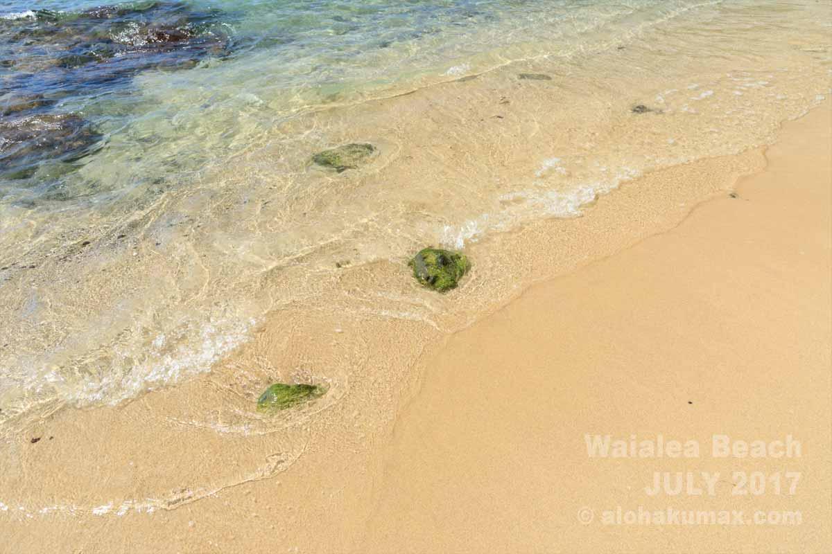 ワイアレア・ビーチ(ビーチ69) » 海と倒木が絵になる! / ハワイ島 コハラ・コースト(サウスコハラ)