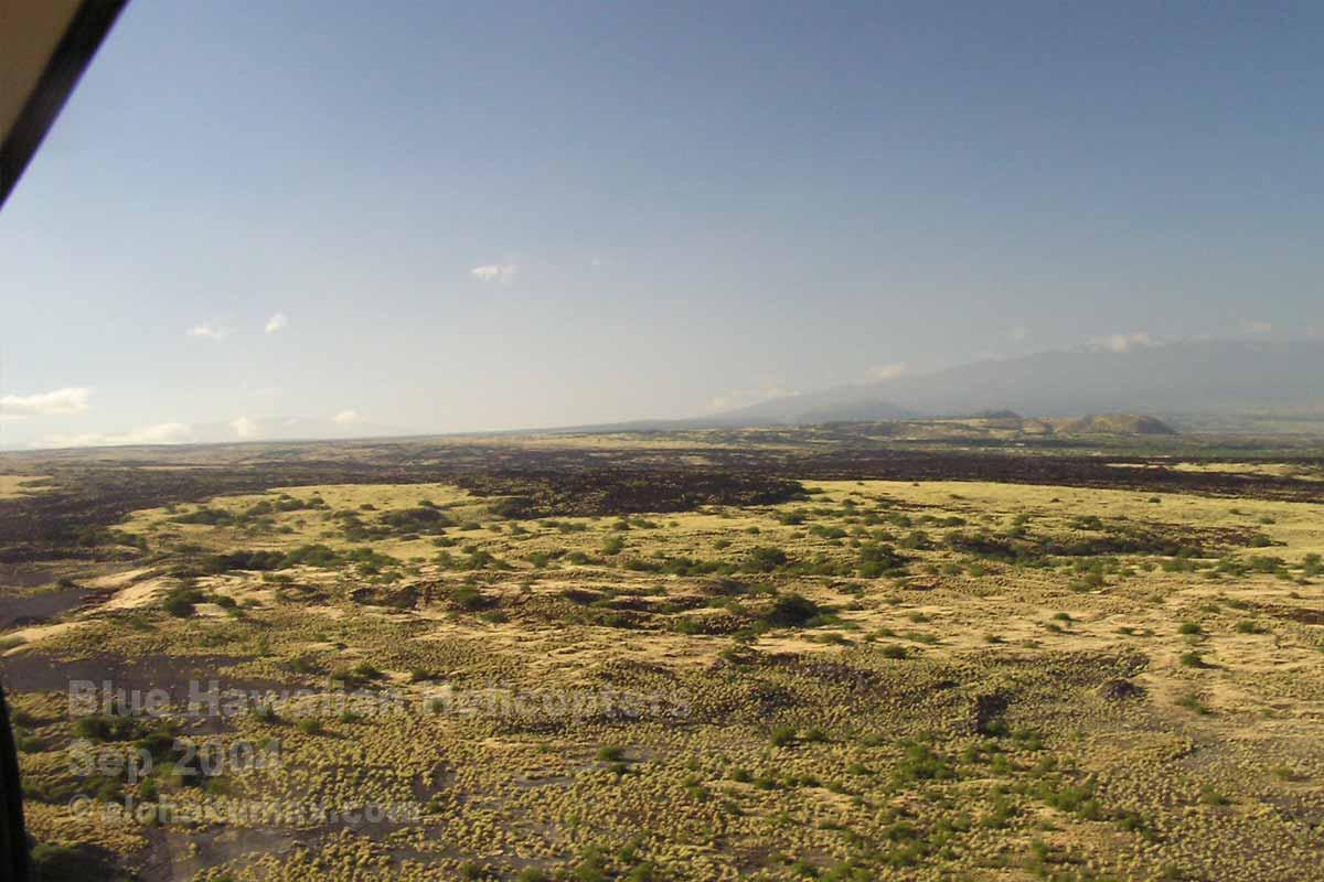 薄黄色い草原