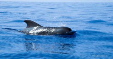 [CLOSED] メレナイア ドルフィンスイムツアー(2010年9月) » イルカに優しい少人数制 / ハワイ島