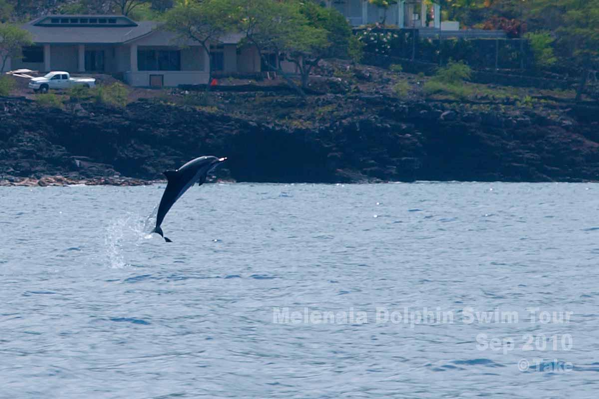 イルカのジャンプ その1