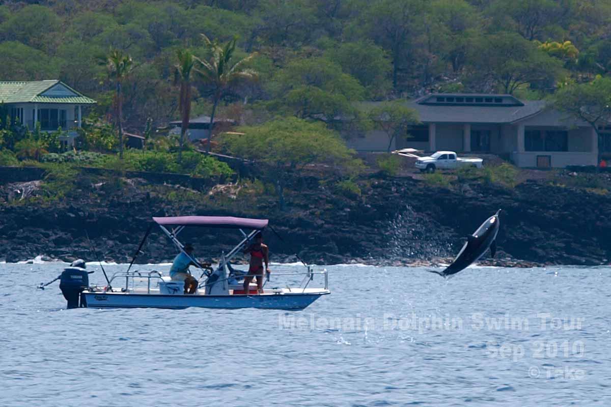 イルカのジャンプ その2