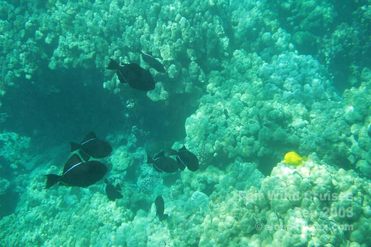 ケアラケクアの海の中 その1