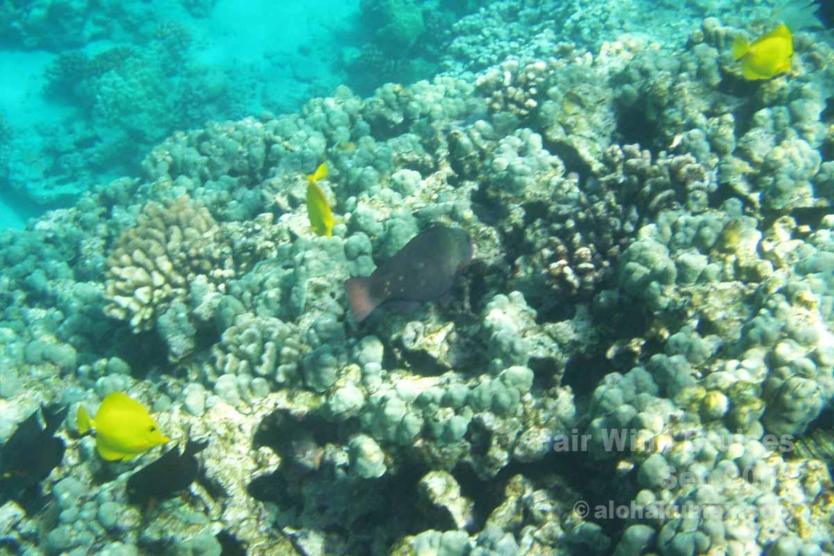 ケアラケクアの海の中 その2