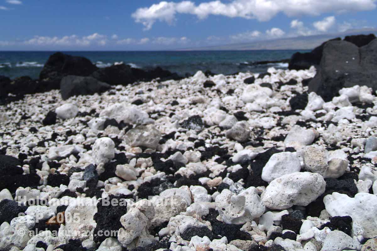 白いサンゴの石