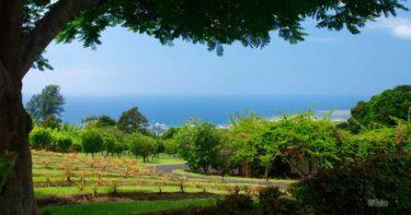 ホルアロア » 日系の香りが残るコーヒーの町 / ハワイ島