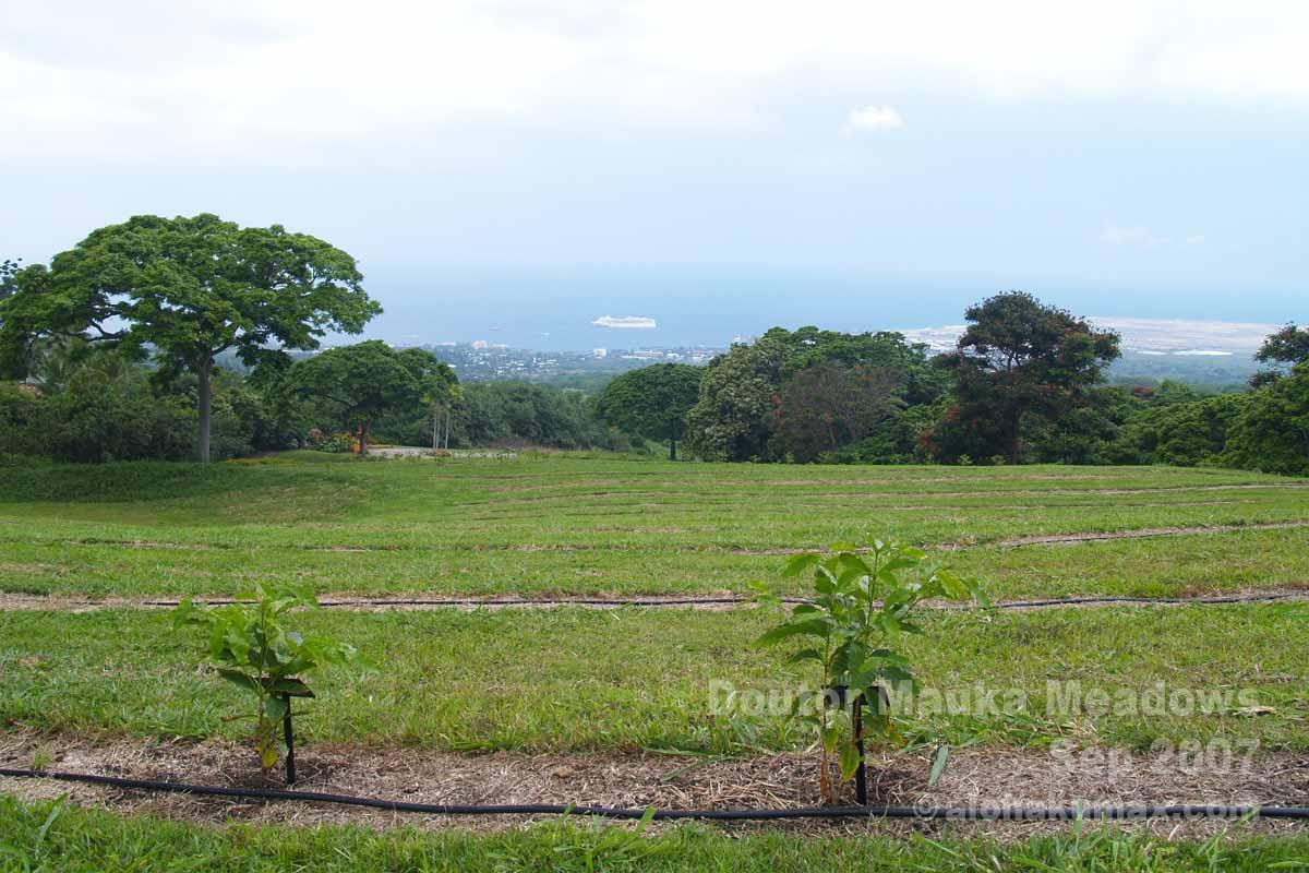 残り僅かな植樹スペース