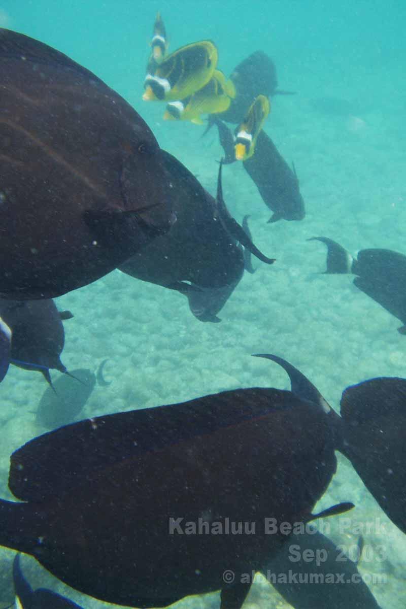 黒い魚の群れ