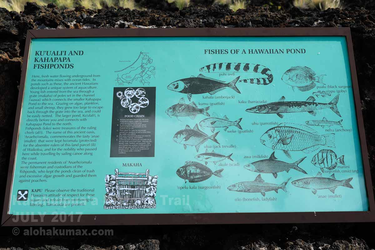 フィッシュポンドの魚たち