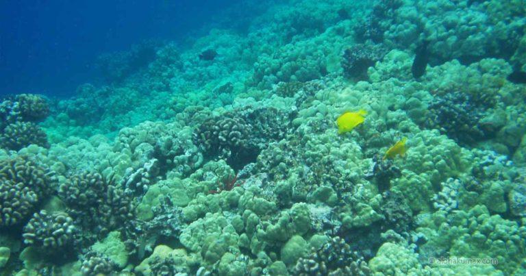 ケアラケクア湾