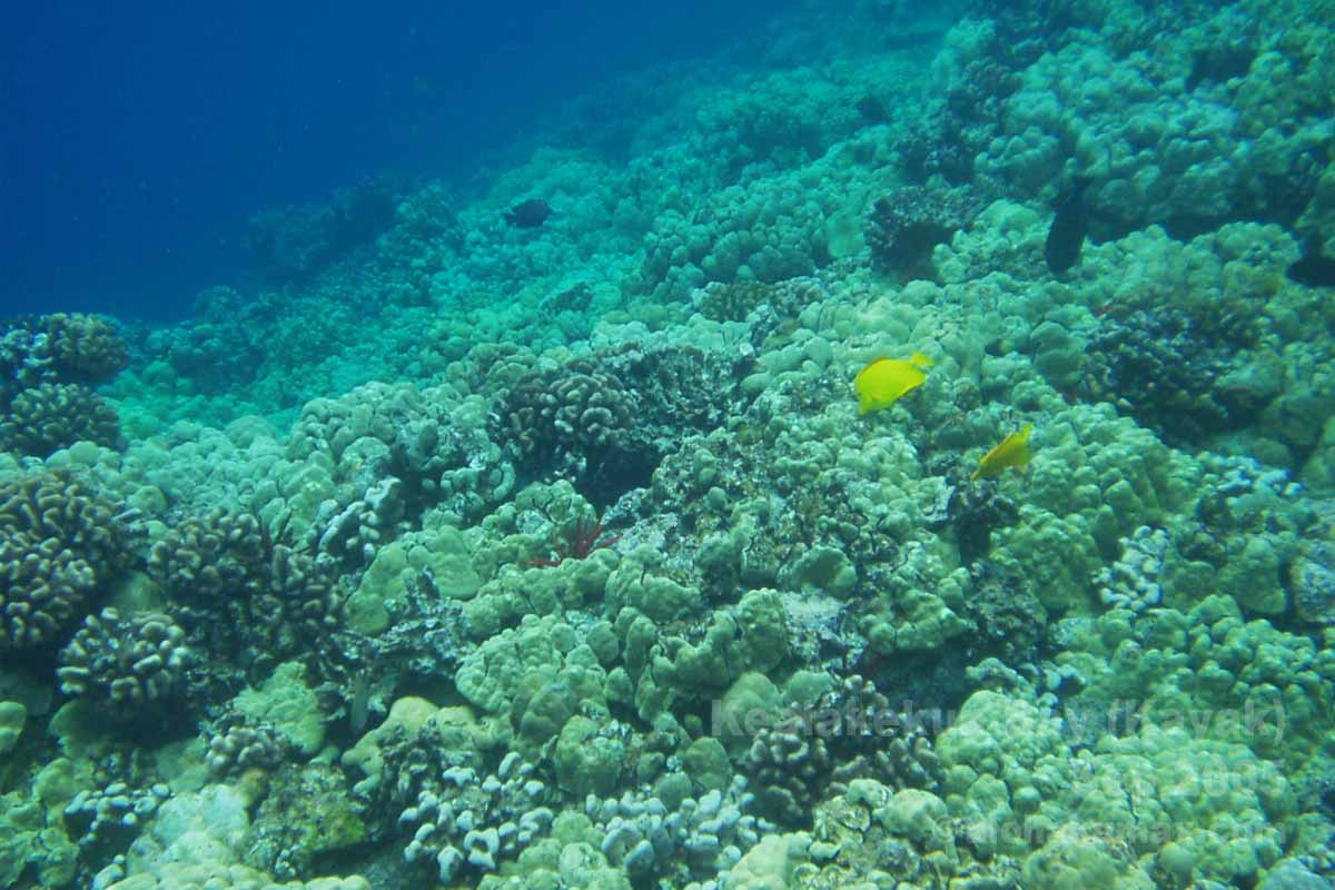 海の深い青い色が綺麗