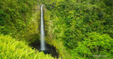 アカカ滝州立公園 » ハワイ島の滝と言えばココ!ジャングル感が楽しい / ハマクア・コースト
