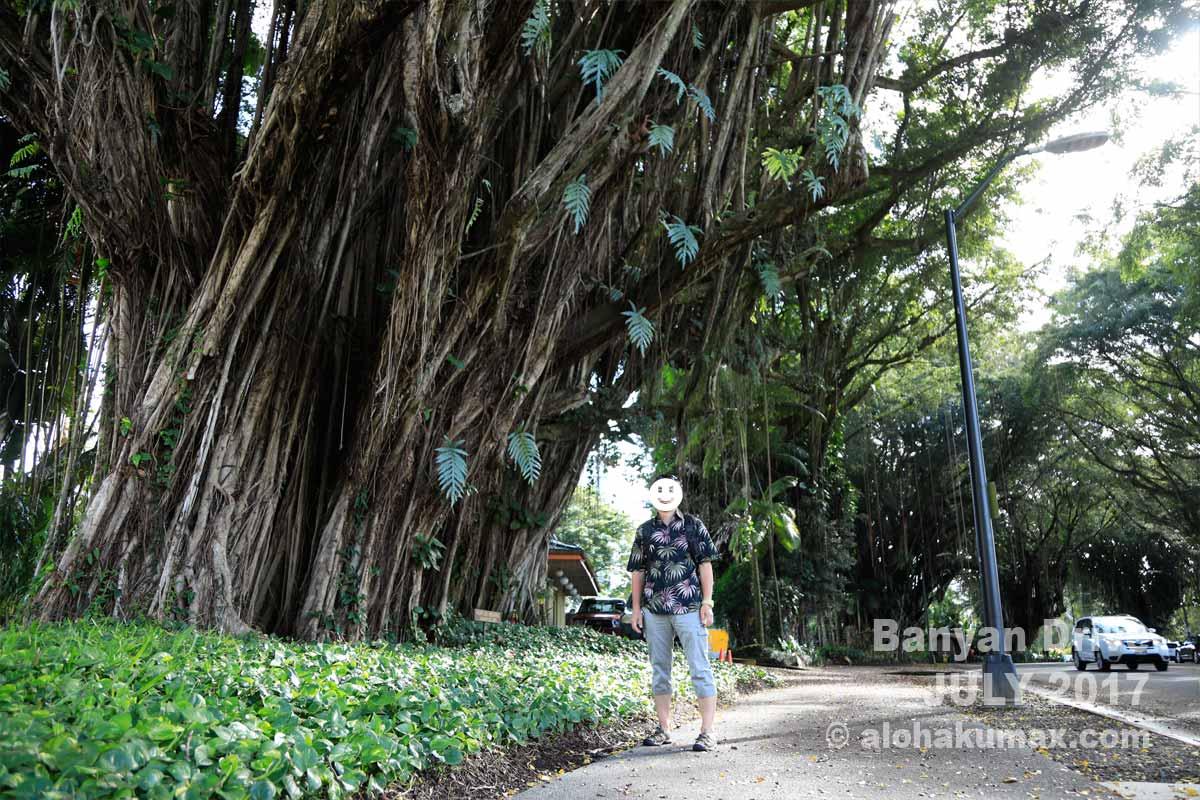 大きなバニヤンの木