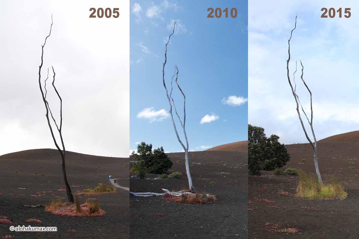 立ち枯れの木の10年間。枝っぷりがほぼ一致!