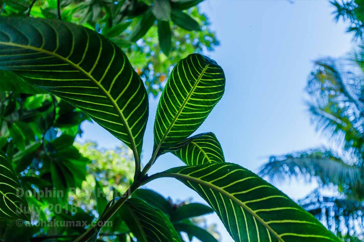 トロピカルな葉