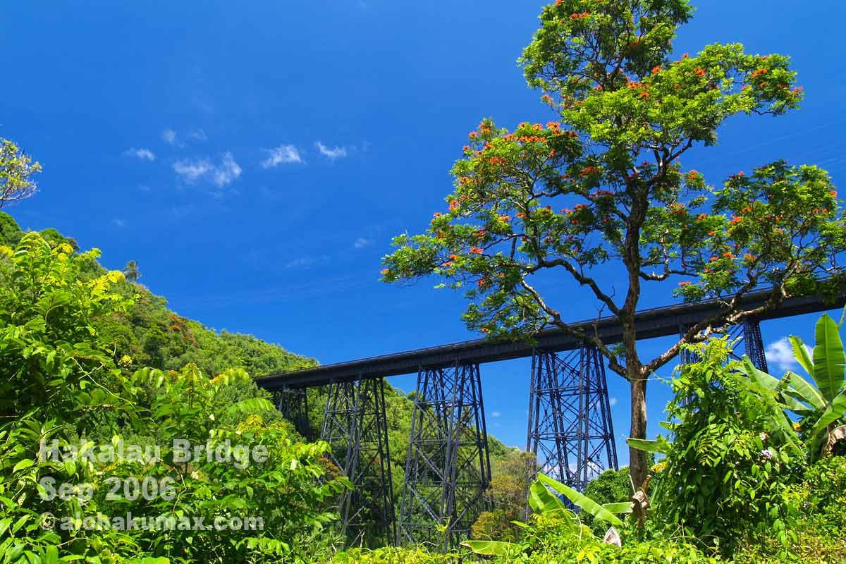 アフリカンチューリップの木と鉄橋