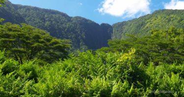ヒイラヴェ滝 » ワイピオ渓谷で最も有名な可憐な滝 / ハワイ島