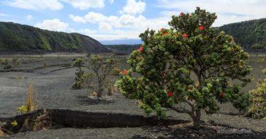 キラウエア・イキ・トレイル » キラウエア火山の人気トレイル!火口の底を歩こう / ハワイ島