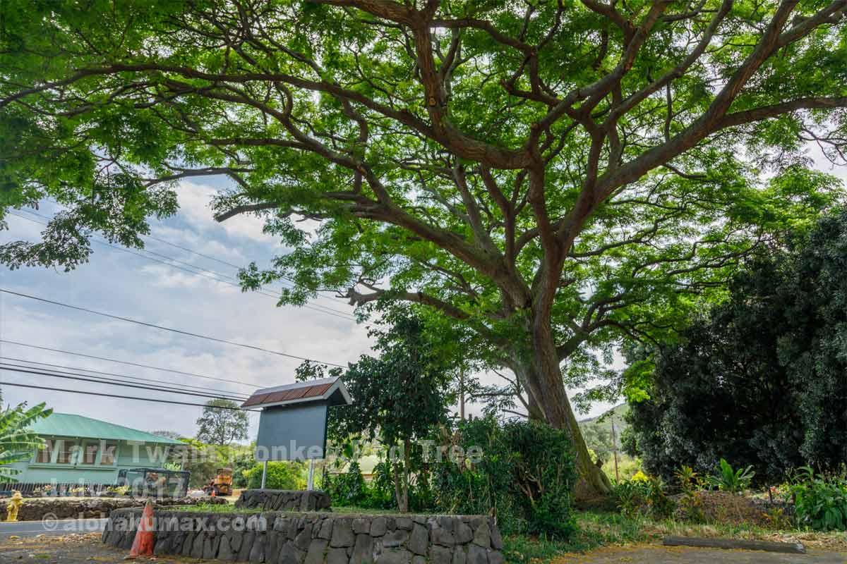 2代目マーク・トウェインの木
