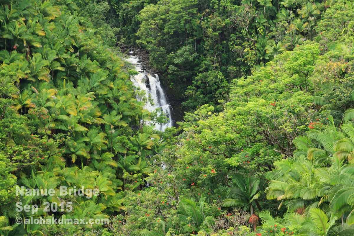 ジャングルに流れる小さな滝