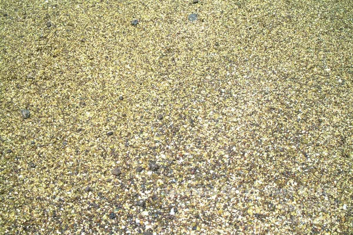 オリーブ色の砂