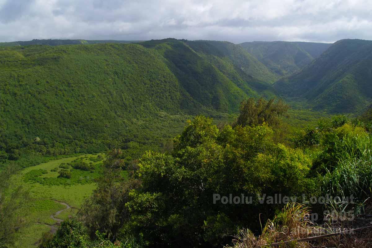 緑に覆われたポロル渓谷