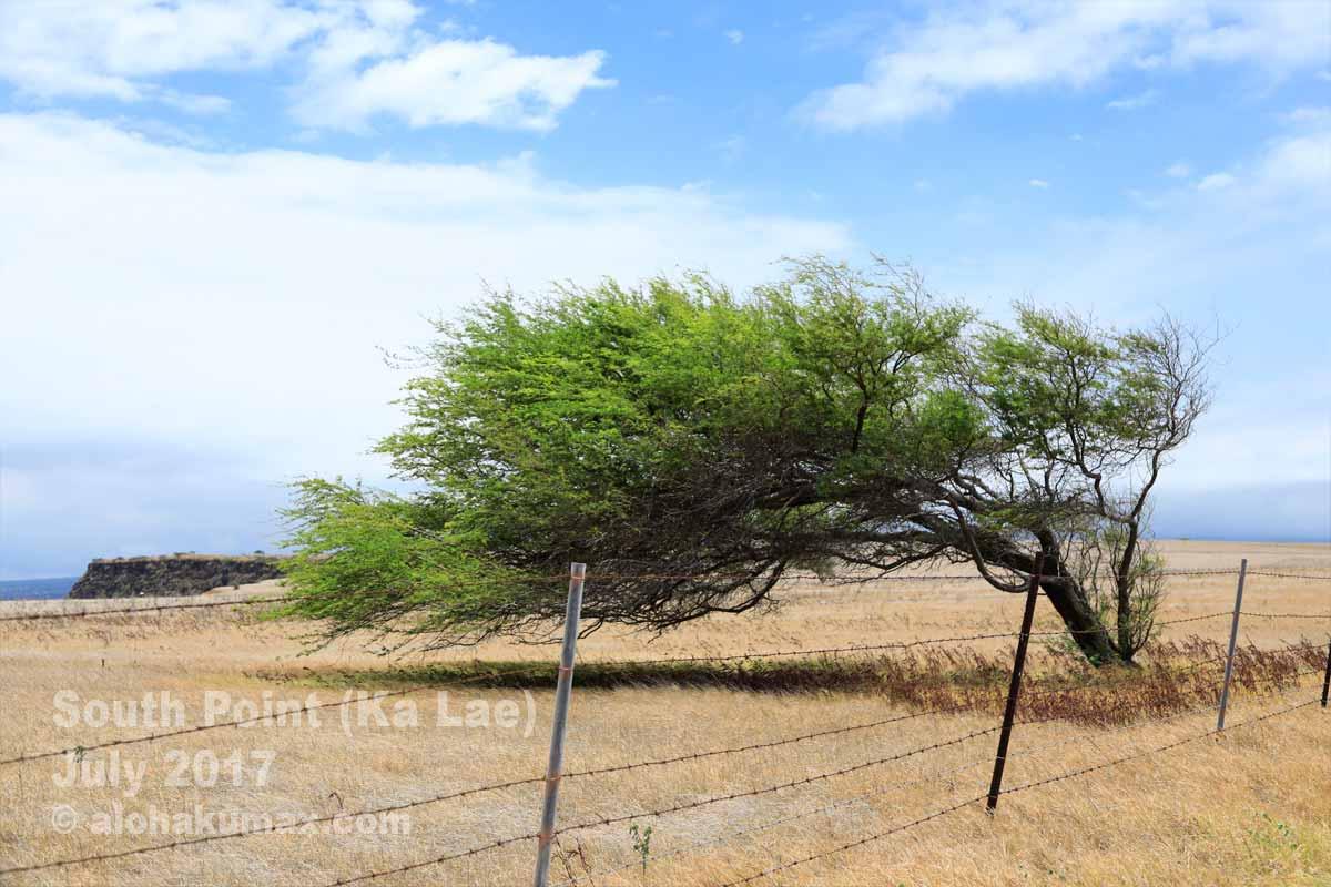 なびいている木
