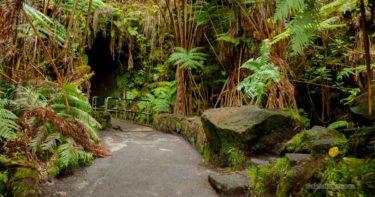 サーストン・ラバ・チューブ » 溶岩が創ったトンネルを歩こう! / キラウエア火山 ハワイ島