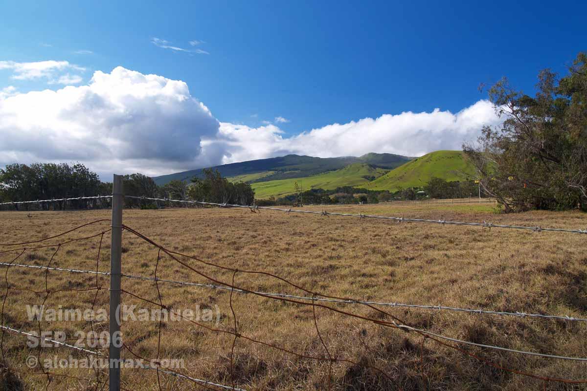 茶色い牧草地(190号線沿い)