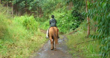 [CLOSED] ワイピオ・リッジ・ステーブルズ(2002年9月) » 2.5時間コース / ハワイ島 ワイピオ渓谷