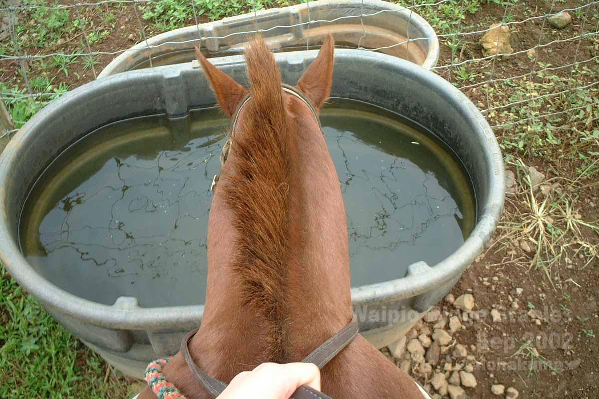初めて馬に乗る