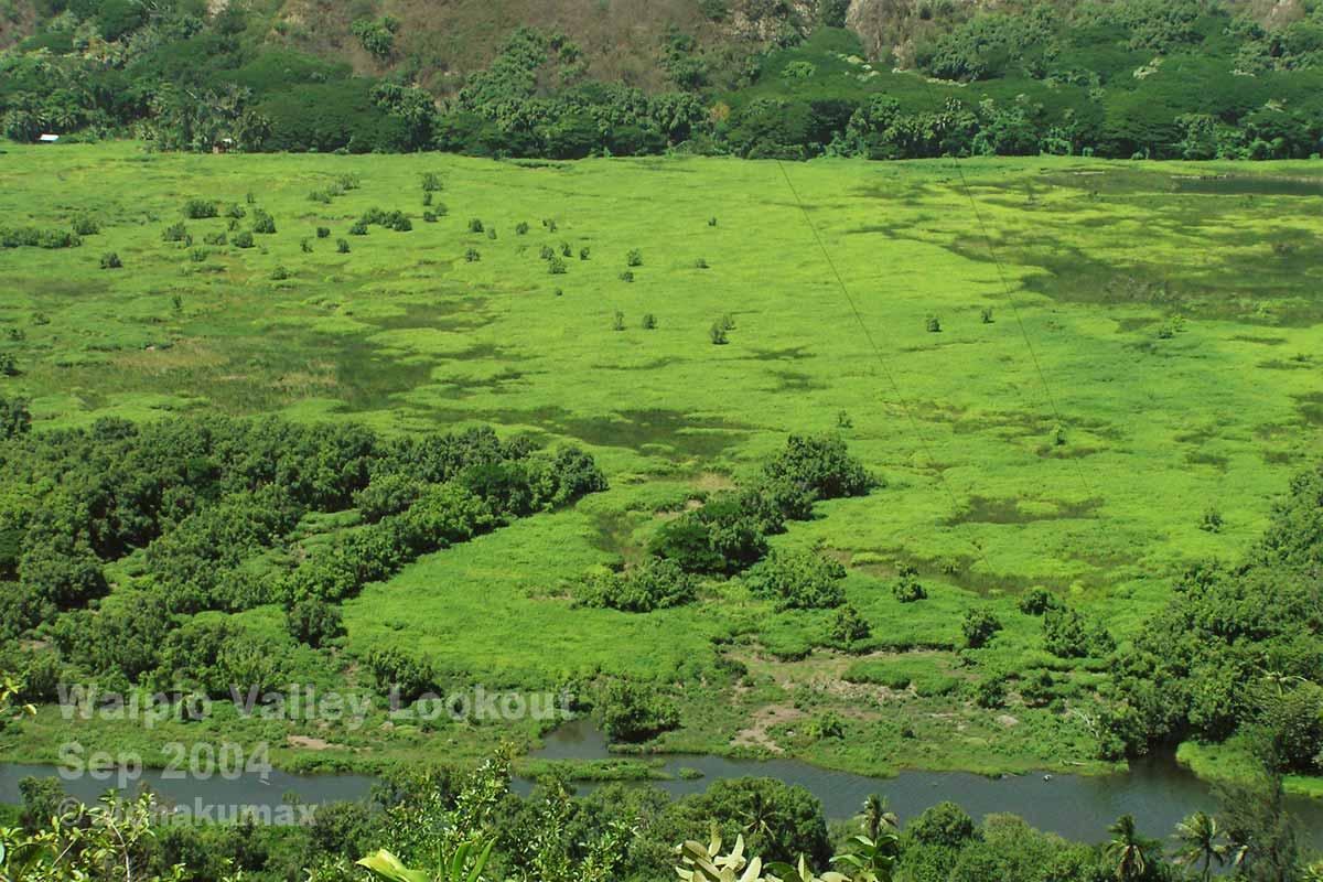 緑鮮やかな谷底