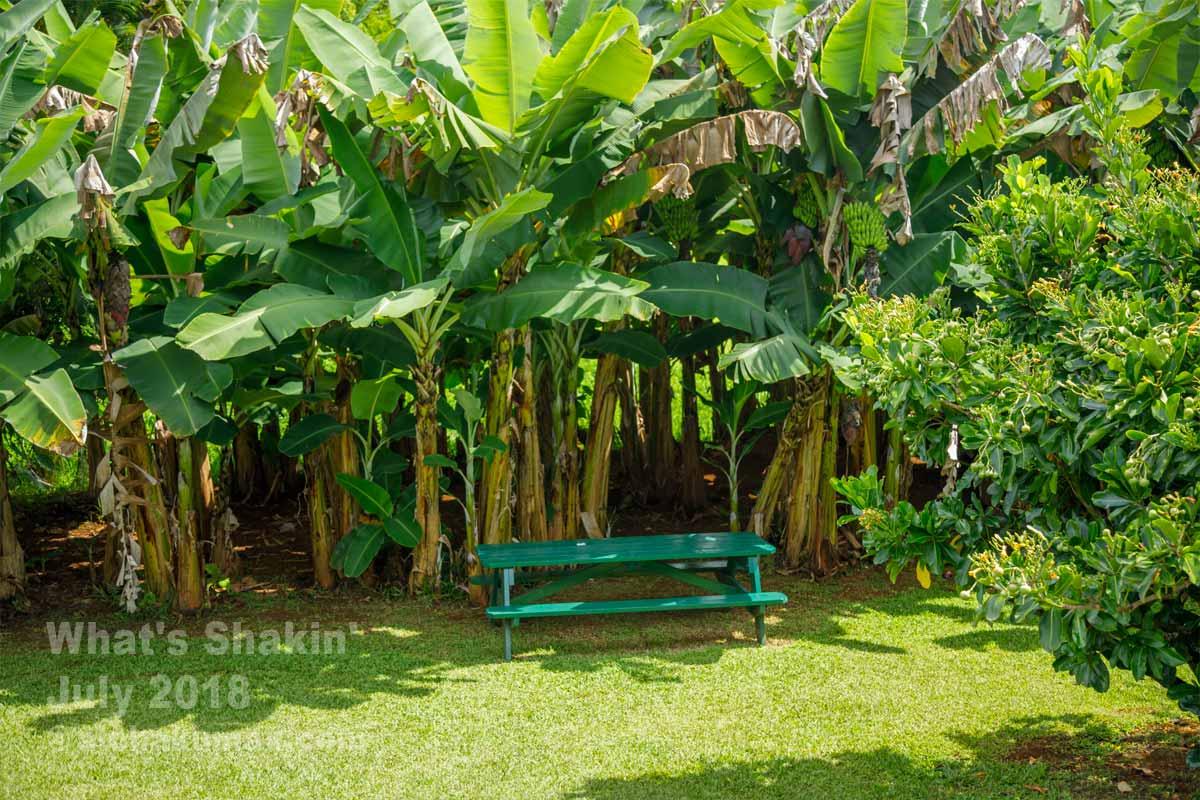 バナナの木とベンチ