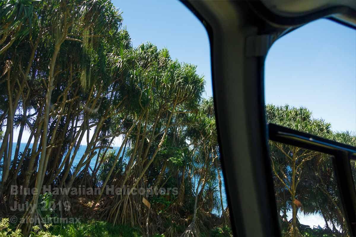 ハラの木々の間を飛ぶ