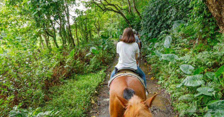 日本語ガイドと行く!ワイピオ渓谷 乗馬ツアー(2019年7月)