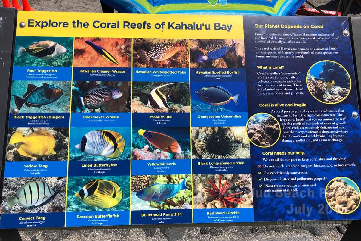 カハルウの魚たち